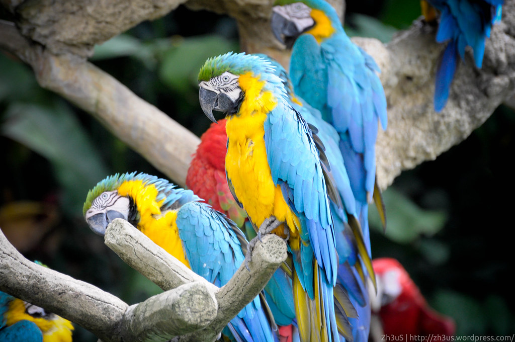 Jurong Birdpark (24 of 89)