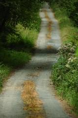 Chemin de bois (YellowSingle ) Tags: cheval nikon champs culture agriculture pau boule viticulture pyrnes atlantique paysan pr barn mas d2hs oloron paysannerie ledeuix cardesse