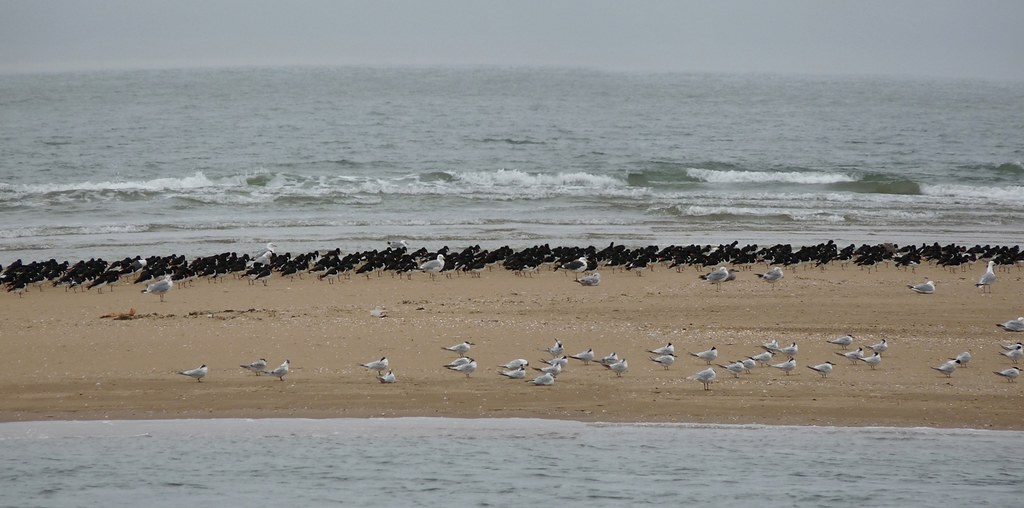 24789 - High Tide Roost, Pembrey Harbour
