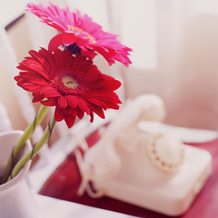 I can't sit around and wait for the telephone to ring. (www.juliadavilalampe.com) Tags: pink flowers stilllife window square chair telephone cream llamada silla bodegn getty calling gettyimages gerberas chaulafanita juliadavila juliadavilalampe