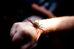 DSC_2403 (Angela_Toidze) Tags: travel vacation thailand spider dima khaoyainationalpark scorpionspider