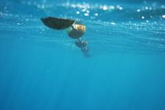 IMG_3214 (Mike Pechyonkin) Tags: sea mediterranean underwater croatia rope dubrovnik buoy adriatic 2011  buoyant    dicapac      dicapacwps5