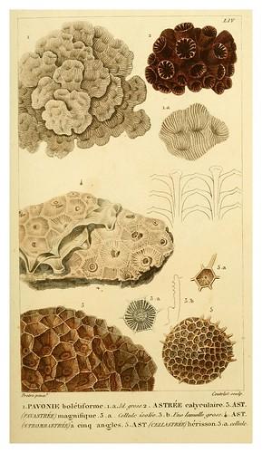 013-Manuel d'actinologie ou de zoophytologie (Volume plates) 1834- H.-M. Ducrotay Blainville