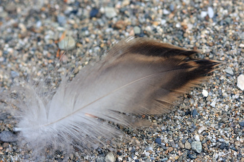 Raptor Feather by kayaker1204