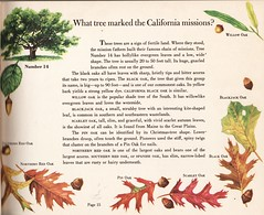 Like Jeopardy, but with Trees! (Calsidyrose) Tags: flowers trees wild plants nature garden science seeds botany biology hoticulture ephemeradesigngraphicartillustrationartworkfonttypeface