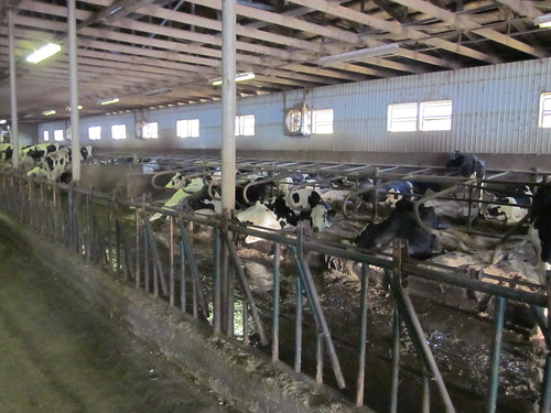 Birchwood Dairy (Abbottsford BC, Circle Farm Tours)