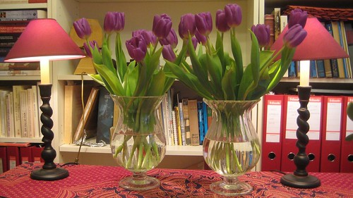 tulips by Anna Amnell