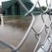 Washington Kastles Stadium still has a bit of standing water.