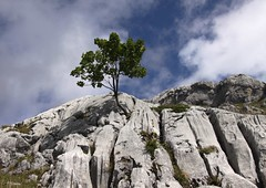 Visite  un ami (Larch) Tags: sky cloud mountain france alps tree rock montagne alpes friend niceshot ciel ami nuage 74 arbre rocher hautesavoie wow1 erable rhnealpes lereposoir bargy fantasticnature concordians oltusfotos mygearandme grandbargy grottesdemontarquis flickrstruereflection1 flickrstruereflection2