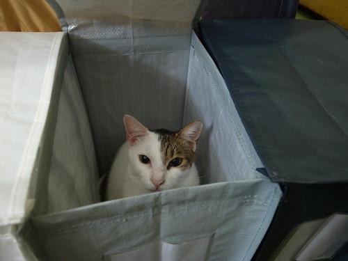 箱子裡的貓