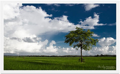 Shaping clouds (Rhivu_Ray) Tags: world travel blue sky cloud india color tree green art nature beauty clouds canon landscape photography eos freedom asia alone tour rice paddy earth farming august bluesky getty lovely common bengal hdr bangla rainyseason colorgreen westbengal lonesome bestofnature naturewallpaper indianlandscape bestofindia canoneos7d canon7d landscapesofindia paschimbanga hirati ringexcellence rhivu rhivuray landscapeofwestbengal rhitamvarray rhivuphotography