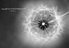 انبثاقَ الحياةِ (mzna al.khaled) Tags: light bw detail macro beautiful canon focus dof natrue flikcr 105mm 50d ماكرو macrolife فوكس كلوزاب mzna peregrino27blackwhite