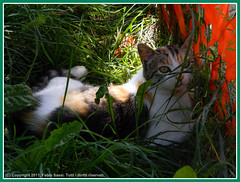 Gatti_679_2011-1 (Herbert9999) Tags: gatti