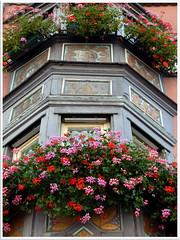 Rottweil (abac077) Tags: flower window fleur germany balcony balcon allemagne fenetre rottweil foretnoire badewurtemberg scchwarzwald