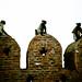 Three monkeys lazying around in Gandhi's Gujarat