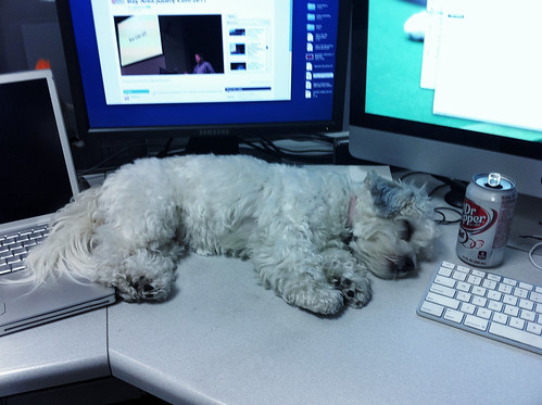 Truly zonked puppy at dad's work