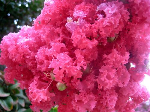 sherbert pink