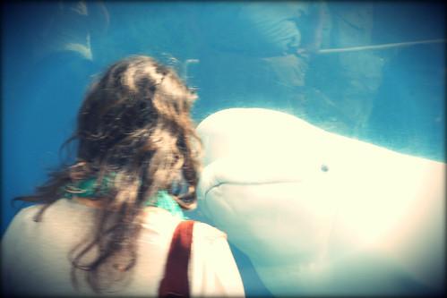 whale chan