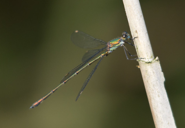 willow emerald 3