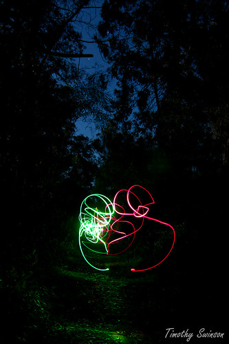 Light Trails Forest 2