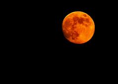 Pumpkin Thief (I Blinked) Tags: fullmoon harvestmoon chulavista otayranch clevelandnationalforest sotherncalifornia