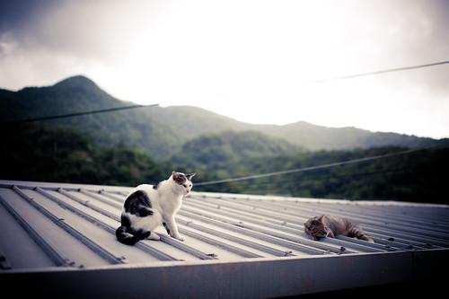 聽,侯硐的雨聲與貓的呼聲