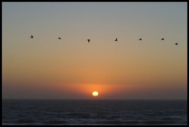 sunset and bird formation