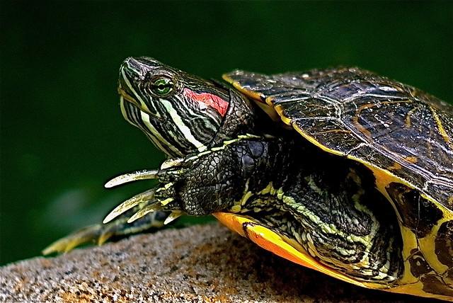 Tortoise Move