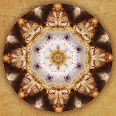 homage to lascaux mandala (SueO'Kieffe) Tags: digital crystal mandala meditation spiritual ascension auraliteamethyst