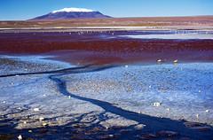 Laguna Colorada - Bolivia (tigrić) Tags: travel vacation bird southamerica nature landscape nikon bolivia paisaje saltlake andes altiplano borax lagunacolorada jamesflamingo redlagoon southwesttour eduardoavaroaandeanfaunanationalreserve