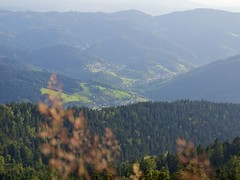 view from the hill (olipennell) Tags: trees germany schwarzwald blackforest mummelsee badenwurttemberg baume