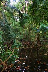 Mxico - La Selva / Forest / Wald (Galeon Fotografia) Tags: naturaleza nature mxico mexico rainforest natur jungle mexique tabasco messico urwald jungla regenwald  primevalforest regenwoud wwwvisitmexicocom forttropicale  pantanosdecentla kalikasan  pluviselva fortvierge   foresta florestahmida  pluvial forestapluvial fortquatoriale forttropicalehumide galeonfotografia