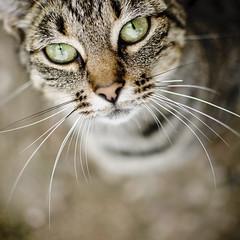 Cat #225/365