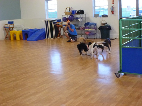 Puppy Class at TAILS