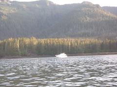 P8120861 (Zrgs2) Tags: alaska fishing sound aug fredericks 2011