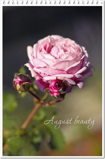 roses... again:)