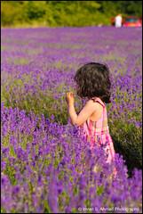 Zahra (imran*) Tags: uk england purple farm lavender surrey 7d gb mayfield unitedkingdon 2011 banstead organiclavender canon7d july2011 mayfieldlavenderfarm canon24mm70mm28l mayfieldlavendarfarm canon24mm7028l