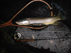 Trophy Owyhee dry fly Brown Trout