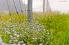 Alpine Fence Friday (andreaskoeberl) Tags: flowers green nature grass fence outdoors nikon dof bokeh hiking depthoffield alpine pilatus alpineflowers hff 35f18 nikon35f18 d7000 nikond7000 happyfencefriday andreaskoeberl