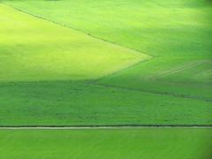 Linien im Grünen (mikiitaly) Tags: italy sommer wiese gras grün weg suedtirol eisacktal pfitschtal colorphotoaward sailsevenseas elementsorganizer