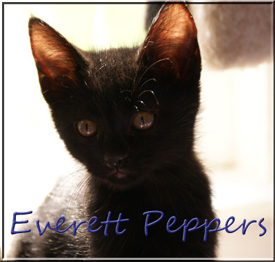 e-peppers