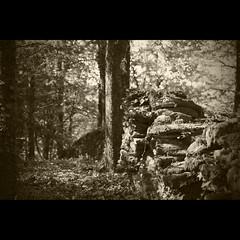 Sous bois en Aveyron