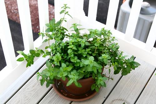 Mint July 26, 2011