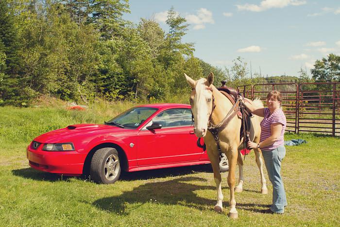 Halifax NS Wedding Portrait Horse Equine photography - Splash & Donna - Nicole Payzant -  (20 of 26)