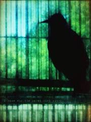 Caged Bird (jacqueline gaines (jq gaines)) Tags: bird texture grunge cage sketchbook retouch iphone iknowwhythecagedbirdsings mayaangelou vividimagination autopainter iphone365 trollieexcellence troiledproud picgrunger irisphotosuite artistaoil
