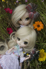 Two sisters laying in a flower field (Valrie Busymum) Tags: dal wig pullip dolo leeke obitsu dotori rechipped amarri