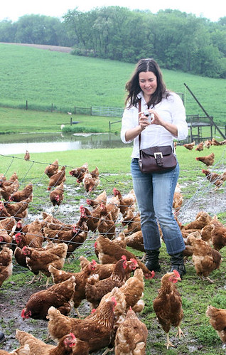 Capturing the Nature's Yoke hens on video