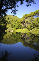 El bosque reflejado / The reflected forest (Juan Jose Ferres ) Tags: reflection ro forest river spain nikon reflected bosque crdoba hoya nd400 trassierra reflejado d7000 sigma175028os