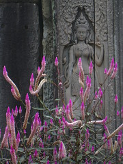 Pretty Apsara (Py All) Tags: pink sculpture woman flower fleur rose stone temple asia cambodge cambodia southeastasia purple pierre femme violet angkorwat carving asie siemreap angkor wat apsara godess asiedusudest dsse