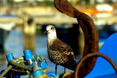 Poser (Mario 2R's) Tags: blue bird eye look smart river boat iron seagull gull wing rope anchor interactive comunication